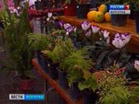 В Волгограде открылась выставка-ярмарка «Монастырские сады»