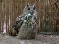 Пополнение в зоологическом саду Свято-Духова монастыря