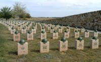 Перезахоронение останков защитников Сталинграда