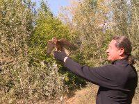 Монастырский фазанарий выпустил соколов